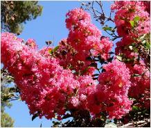 Plantengids foto 39 s en info - Foto droge tuin ...